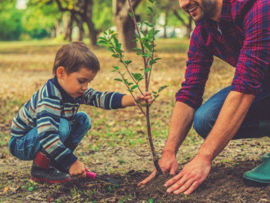Волинян закликають долучитися до відновлення лісів