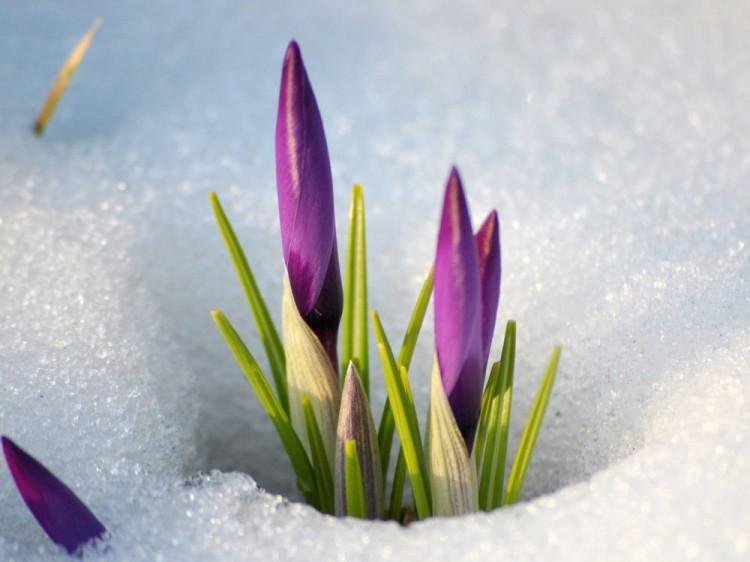 Весна наближається!