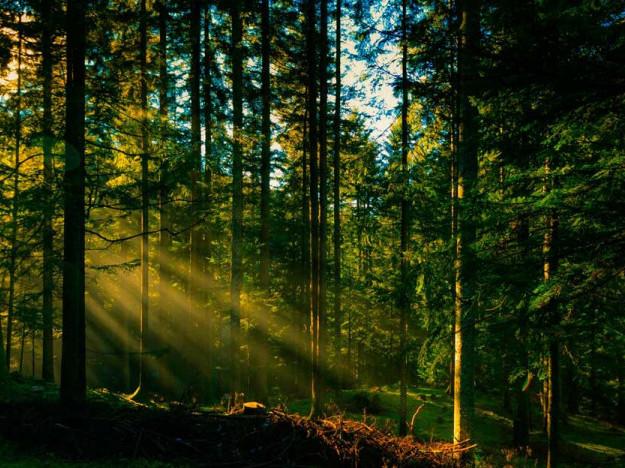 Волинські лісівники запускають конкурс проектів