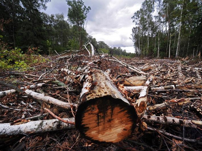 Захист лісових насаджень