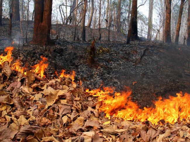 Загроза збільшення кількості пожеж на відкритих територіях