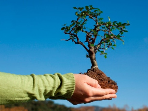 «Посади дерево миру»