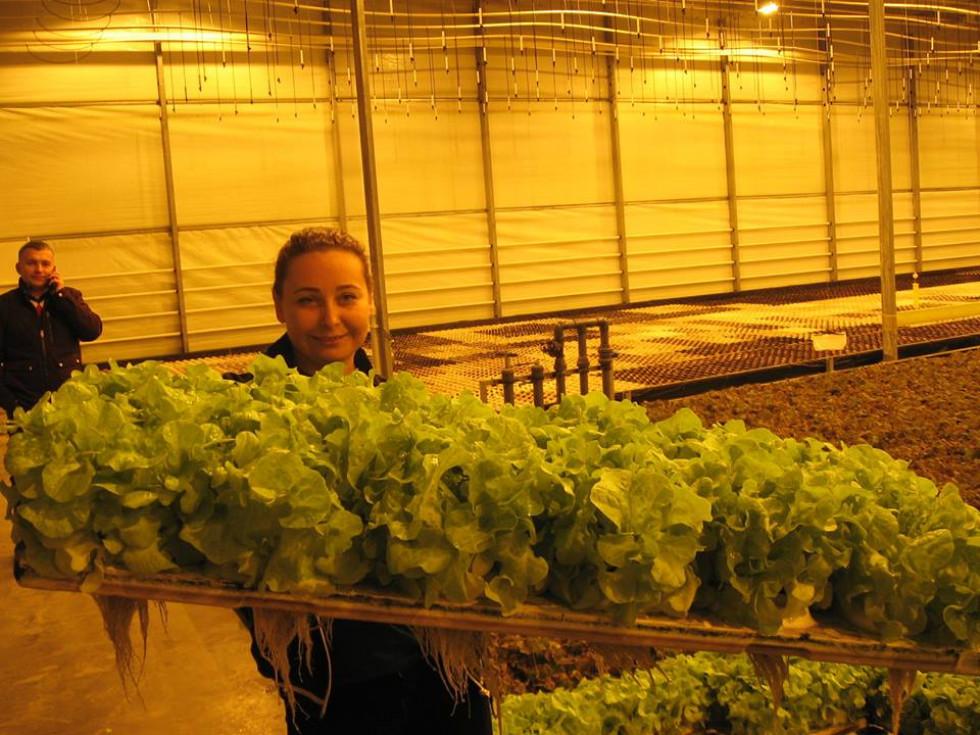 Ось так росте салат за новітньою технологією