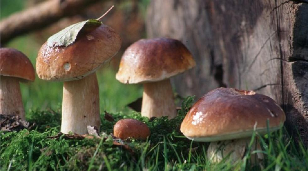 гриби