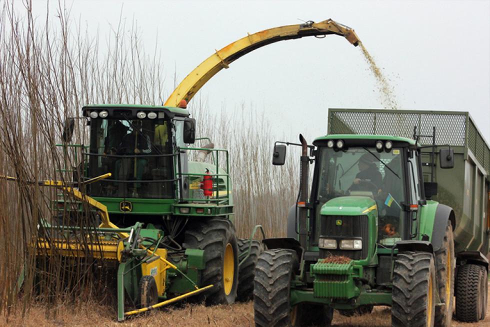 Процес збору вербової щепи. Фото з сайту agravery.com